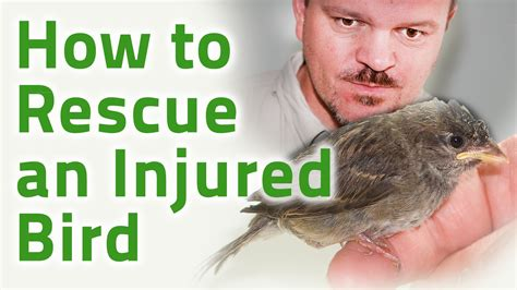 rescue injured bird