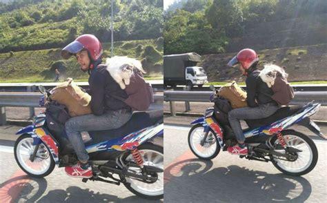 viral gambar lelaki bawa kucing balik raya naik motor netizen pula yang risau