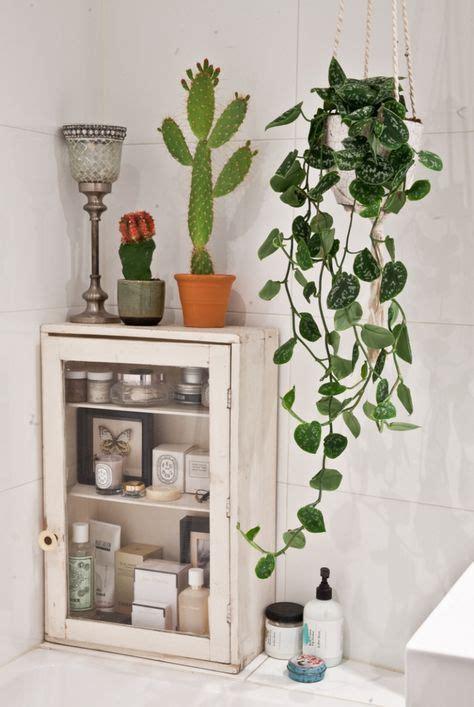 bathroom hanging plants 1624 best home plants images on pinterest