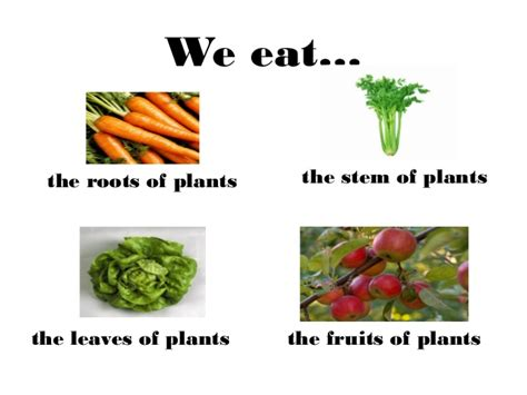 2 vegetables that can be eaten plants powerpoint and interactive activities
