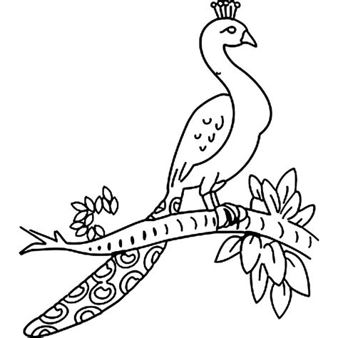 drawing of a easy pencil sketches of peacock easy peacock drawing how to draw a peacock easy step