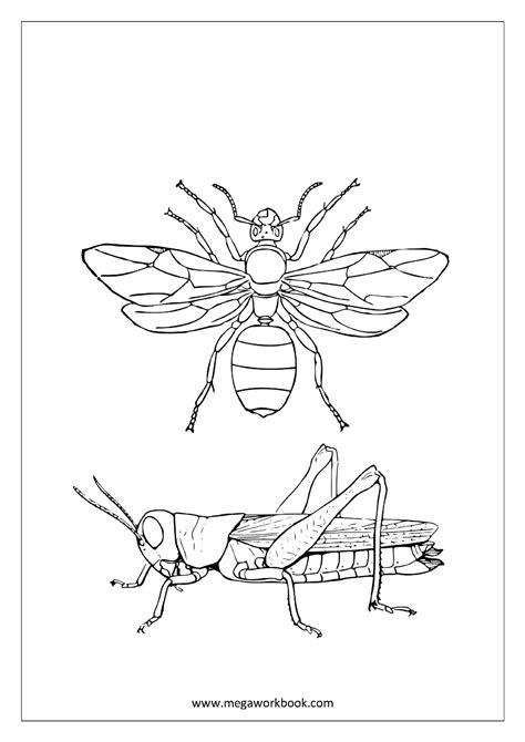 coloring pages birds and insects free coloring sheets animals water creaturs insects