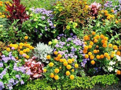piante da fiore da giardino le cure estive per le piante da giardino pollicegreen