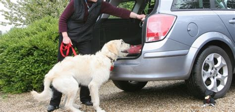 moving a dog to a new house dog advice moving house and travelling with dogs blue cross