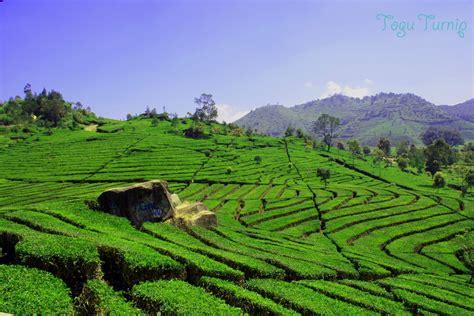 wallpaper alam pedesaan indonesia 35 foto gambar pemandangan alam indah di indonesia foto