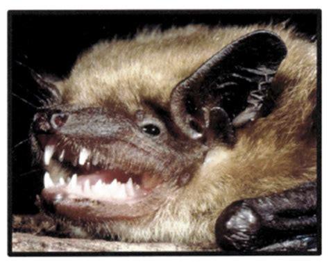 bite rabies rabies and animal bites