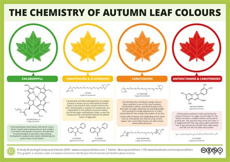 leaf colors the chemicals the colours of autumn leaves