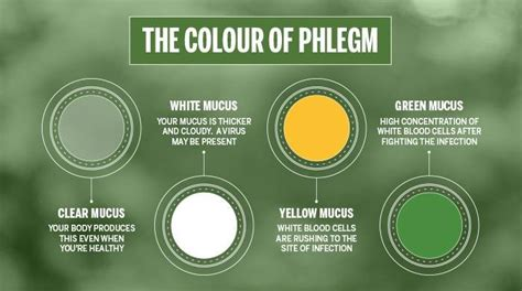 sinus infection mucus color mucus color chart phlegm mucus color shows the health