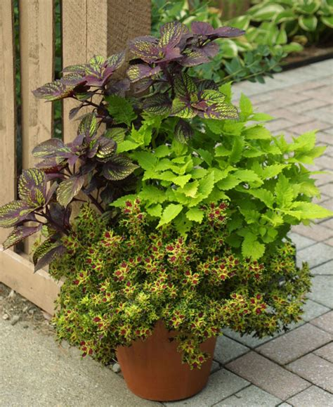 plant combination ideas for container gardens great plants flower power s annuals gardening