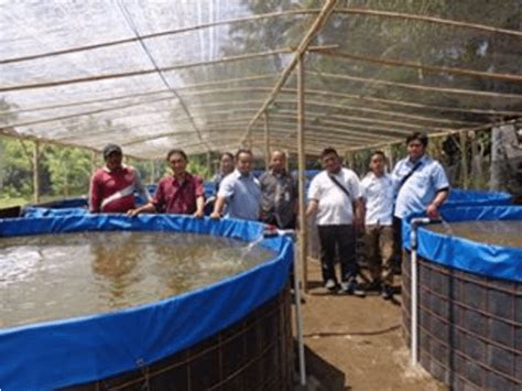 Bibit Lele Magelang Total Aquaculture Magelang Wisata Magelang