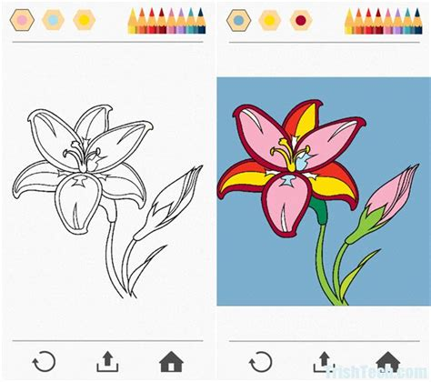 colorfy app coloring pages colorfy coloring pages for grown ups