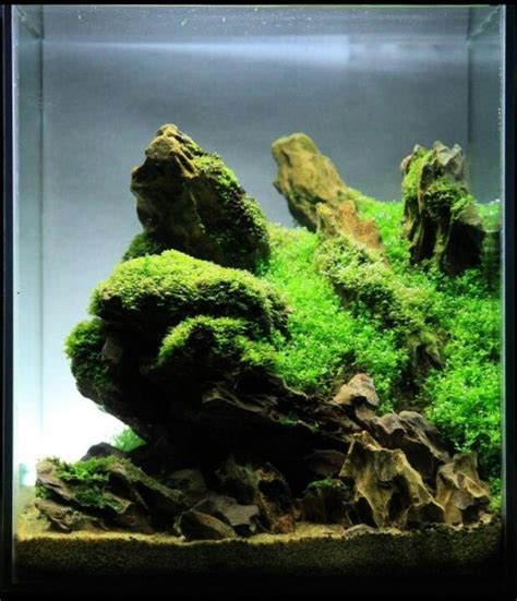 tank aquascape nano aquascapes aquascaping aquarium