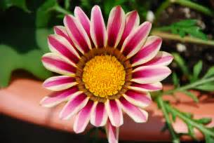 Flower Pic by File Colourful Flower 03 Jpg