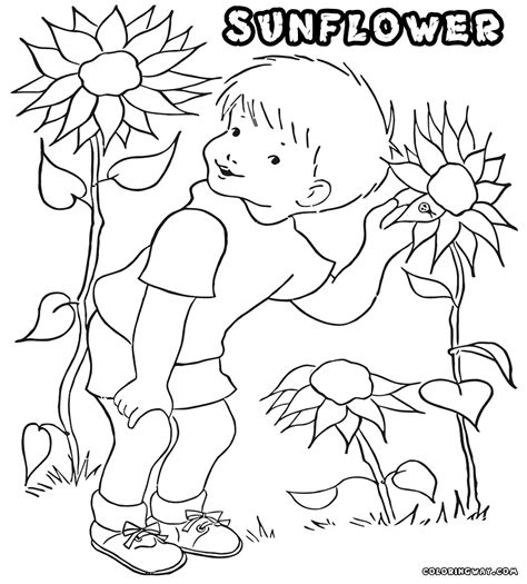 sunny daisy coloring page sunny the sunflower coloring page sunny the sunflower