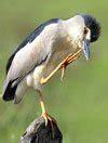 Pakan Burung Walet Anakan burung dan perkembangan burung trend burung