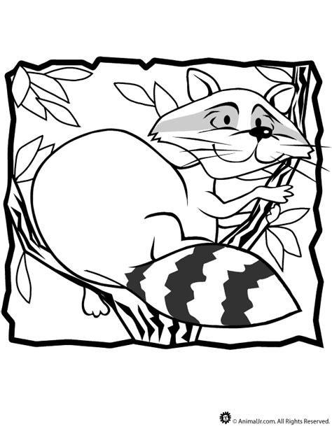 raccoon coloring pages kindergarten racoon coloring download racoon coloring