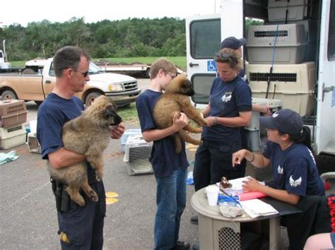 rescue groups animal rescue groups help pets in disaster aftermath tails of the city