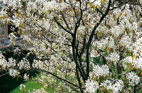 alberi per piccoli giardini giardini