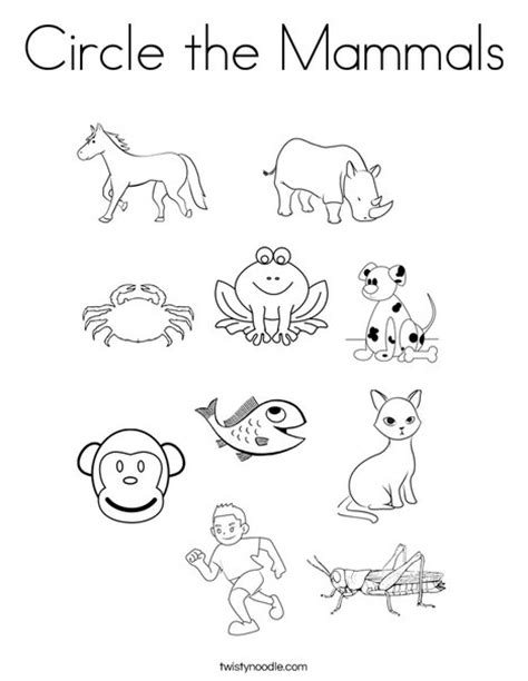 Mammals Coloring Pages circle the mammals coloring page twisty noodle