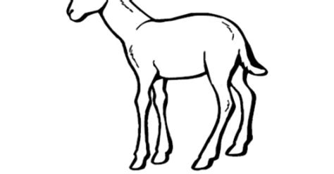coloring pages springbok springbok coloring page my country crafts