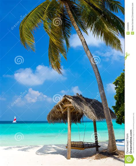 swinging on vacation swing on a tropical beach stock photo image 44268835