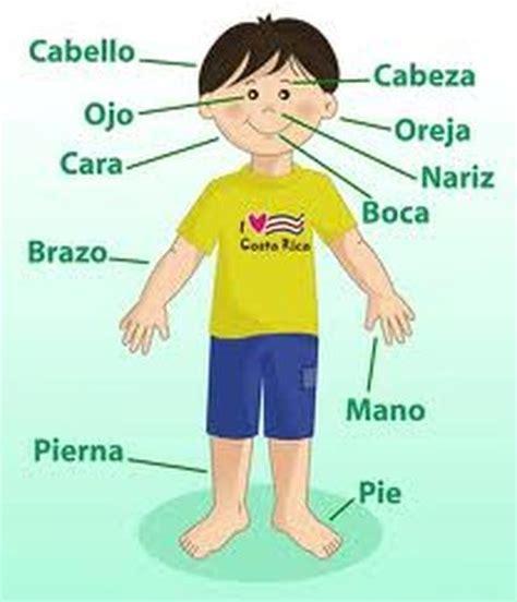 imagenes y nombres de las partes del cuerpo yaneli preescolar las partes del cuerpo