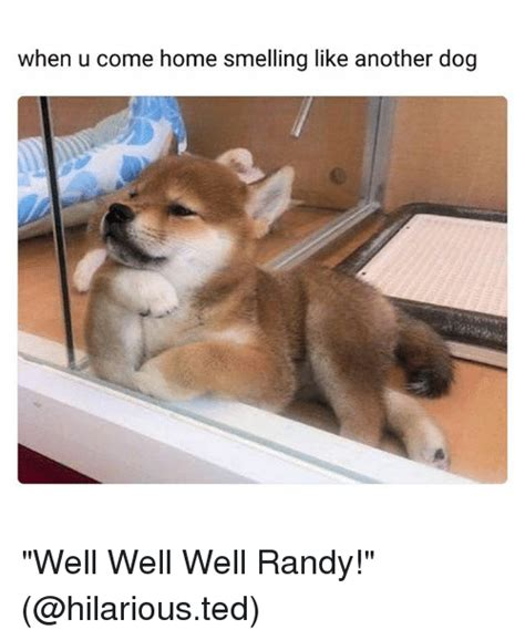keep house from smelling like dog 25 best memes about funny funny memes