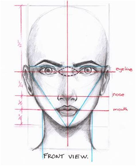 illustrator nose tutorial best 25 face proportions ideas on pinterest