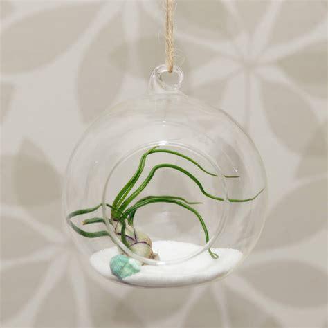 hanging glass globe vase air plant terrarium by dingading