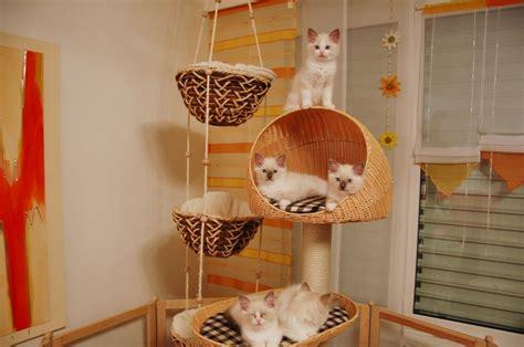 Kleines Katzenklo 900 by Unsere Aufzucht Elfis Elfen