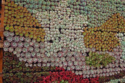 San Francisco Garden Show Succulent Gardens Succulent Wall Succulent Garden Wall
