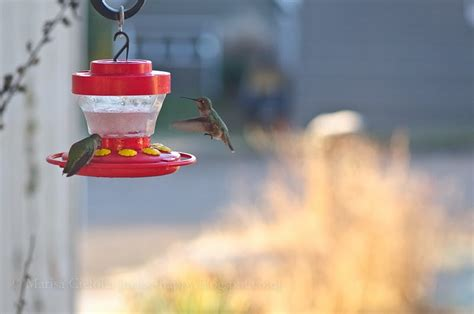 make happy frozen hummingbird food