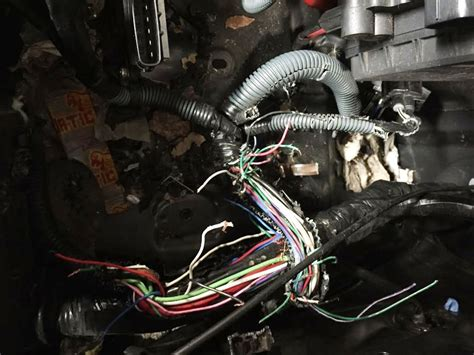 truck wire harness rodents raccoon snare wire wire