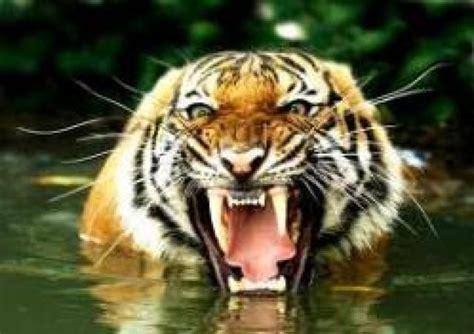 imagenes animales peligrosos ranking de los animales atacan los animales mas