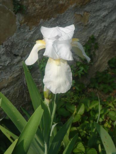 giardino sempre fiorito giardinaggio per un giardino sempre fiorito