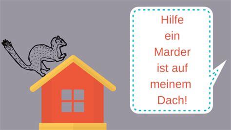 Was Tun Gegen Marder Im Haus 5072 by Was Sie Tun K 246 Nnen Wenn Marder Im Dachboden Ist