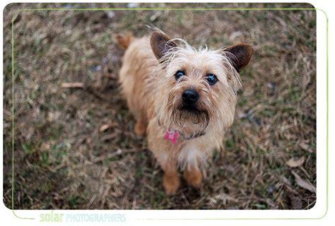 wayside waifs dogs wayside waifs part 4