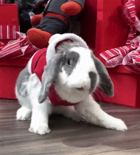 christmas bunny gif find share  giphy