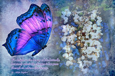 Butterfly Dreams a butterfly dreams by pridescrossing on deviantart