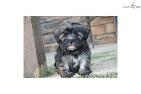 havanese puppies price range havanese puppy for sale near rock arkansas 87d0f33b b0a1