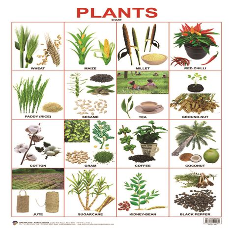 Home Decoratives Online by Buy Plants Chart From Kindercart Com Best Online Kids