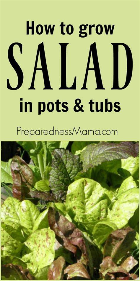 grow salads  pots tubs preparednessmama