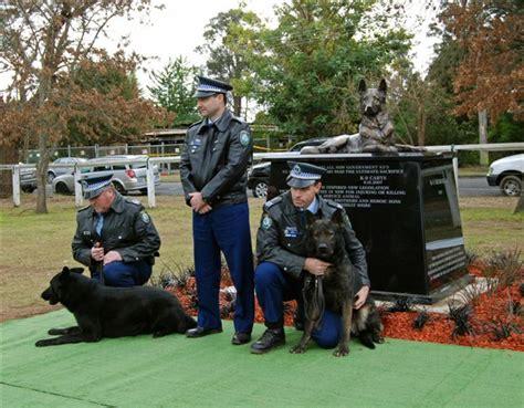 lynn lew k9 vids beychief german shepherd dogs