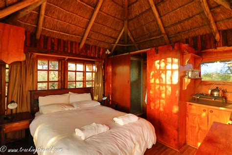 tree house bedroom mokala s treehouse with a view africa geographic