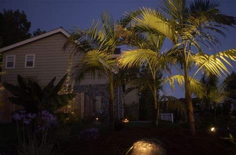 Landscape Lighting For Palm Trees Outdoor Lighting On Palm Trees Dreamscape Projects