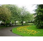 Download Beautiful Hd Green Park And Yellow Flowers Background For