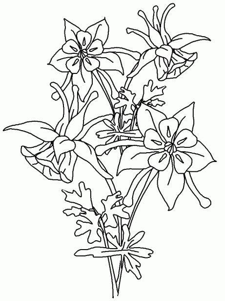 imagenes para colorear flores hermosas dibujos de flores hermosas para descargar imprimir y