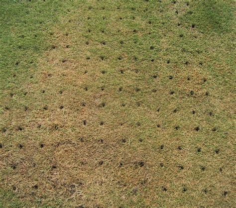 Course On Lawns What You Should by Sprinkler Juice When Should You Aerate Your Lawn