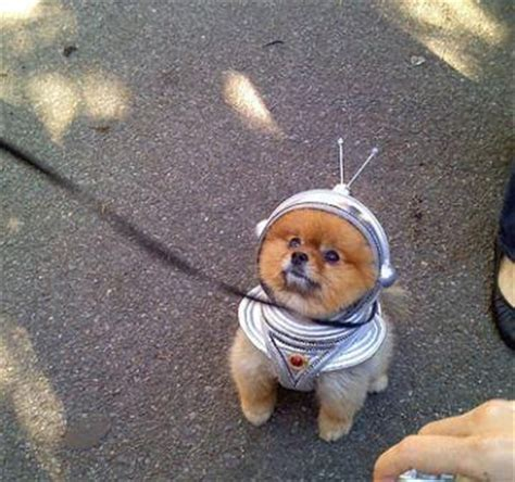 Dogs In Space not just another my name is quot buddy quot dogs in space