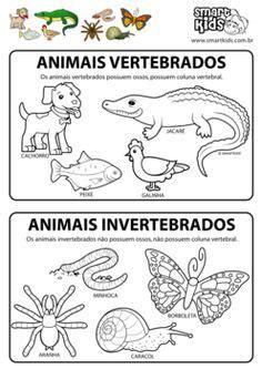 191 que comen los animales vertebrados 191 de que se alimentan animais vertebrados e invertebrados alfabetiza 199 195 o